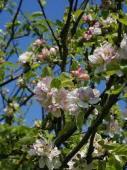 Cele 38 de remedii florale Bach - 18