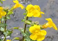Cele 38 de remedii florale Bach - 38