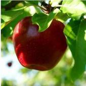 Cele mai indicate fructe pe care trebuie sa le consumi iarna asta