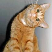 Arta comunicarii la pisici