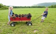 De ce e bine pentru copii sa creasca in preajma animalelor