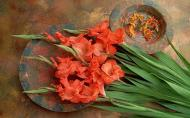 Gladiola, o floare cu o istorie uimitoare