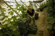 Noutati despre restrictiile de pe piata muncii din Spania