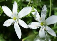 Cele 38 de remedii florale Bach - 3