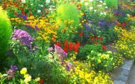 Plante decorative prin frunze, de care ai nevoie pentru realizarea unui covor floral in gradina