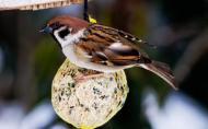 Cu ce sa hranesti pasarile din gradina pe timpul iernii