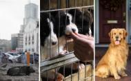 Maidanezii pot fi animale de companie pe viata. Salveaza un caine de la eutanasiere