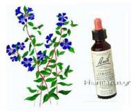 Cele 38 de remedii florale Bach - 9