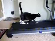Ajuta-ti pisica sa faca miscare