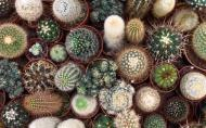 Colectionarul de cactusi. Un roman are peste 30.000 de cactusi