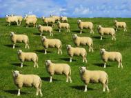 Ai manca alimente provenite din animale clonate? Dar derivate?