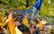 Curatarea gradinii pe timp de toamna