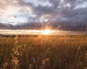Ce remedii naturiste sa alegi pentru alergiile de sezon