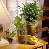 Interior cu plante decorative