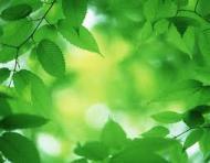 Sfaturi pentru un stil de viata eco (2)