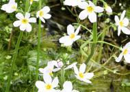 Cele 38 de remedii florale Bach - 34