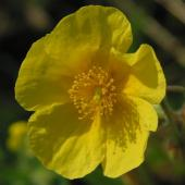 Cele 38 de remedii florale Bach - 30