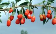 Beneficiile fructelor Goji