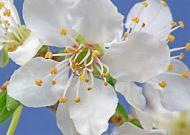 Cele 38 de remedii florale Bach - 11