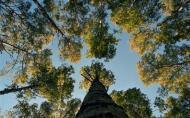 WWF Romania si Ministerul Mediului colaboreaza pentru protejarea padurilor virgine