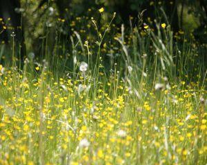 Remedii naturiste care amelioreaza simptomele alergiei