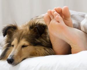 Cum te ajuta un animal de companie sa te odihnesti mai bine