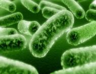 Ce mananci cand iei antibiotice