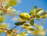 Beneficiile pentru piele, par si corp ale uleiului de argan