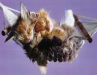 Secretul somnului linistit