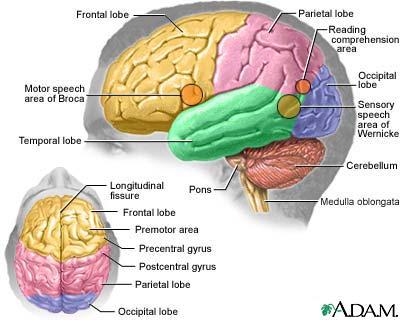 Metode de a ne p?stra creierul în form?