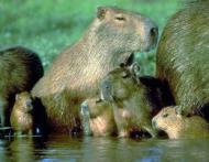 Ipoteza stiintifica: Ce animale vor domina in viitor pamantul