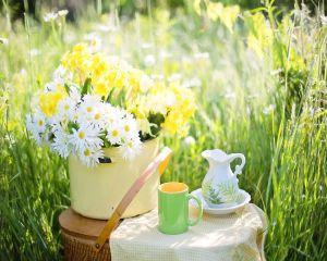 6 efecte remarcabile pe care le are ceaiul verde asupra sanatatii si frumusetii tale