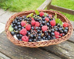 Coacazele negre - proprietati si beneficii pentru sanatate