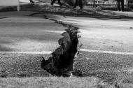 Gandurile unei femei mature: Cum ne petrecem cutremurul?