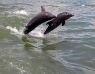 Invata de la delfini sa te hranesti sanatos