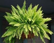 Decoreaza-ti casa cu plante care purifica aerul
