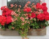 Cine ne uda florile atunci cand plecam in concediu?
