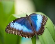 Expozitie de fluturi tropicali vii la Muzeul Antipa