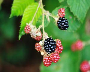 Top 6 alimente care stimuleaza metabolismul