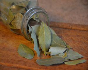 Ce proprietati miraculoase au frunzele de dafin