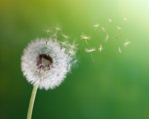 Ce efecte are optimismul asupra ta? Ai fi uimit!