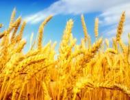 Este oare glutenul cauza tuturor bolilor?