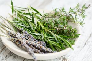 5 Plante recomandate pentru cresterea imunitatii