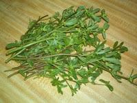 Cea mai bogata planta in omega 3: Iarba grasa (Portulaca oleraceea)