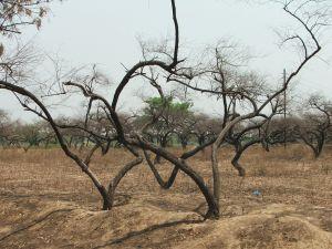 Incalzirea climei creste riscul infectiilor si pe cel al intoxicatiilor