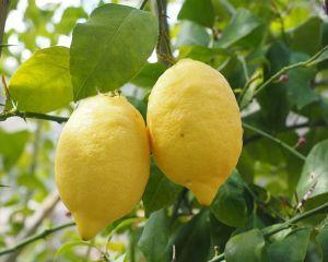 Ce alimente ajuta la absorbtia fierului in organism
