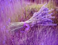 11 arome care fac minuni pentru sanatate