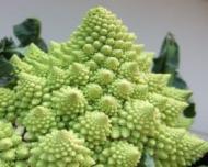 7 legume de care probabil nu ai auzit niciodata
