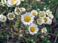 4 plante medicinale pentru igiena intima