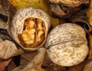 Alimentul minune care ne protejeaza de diabet, cancer, probleme cardiace si artrita